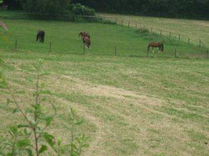 Die nahe Pferdekoppel mit vielen Spielgefährten für Gina.